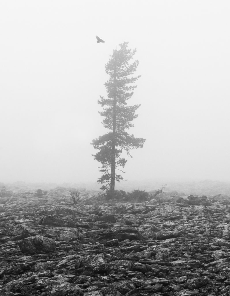 A lonely pine in a foggy blockfield. The Rakka room is inspired by rocky blockfields shaped by nature.