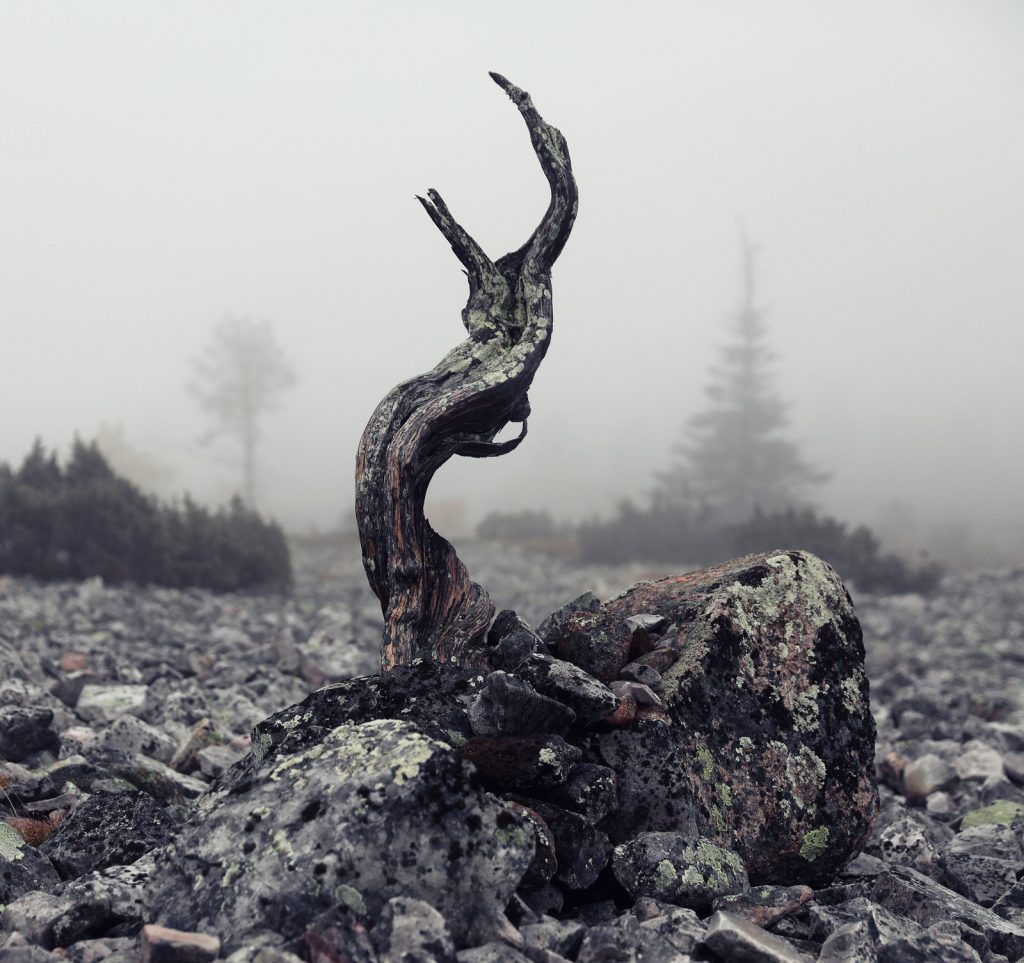 A small snag in the middle of a foggy blockfield. The Kelo room is inspired by old dead trees.