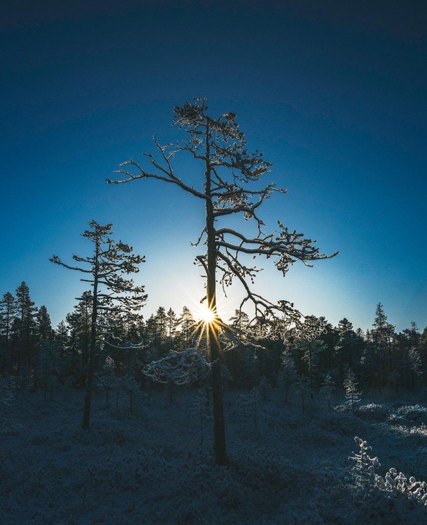 Laskevan auringon kajo talven sinisenä hetkenä männikössä. Kajo-huone on saanut inspiraationsa Lapin talven taivaanrannassa viipyilevästä valosta.